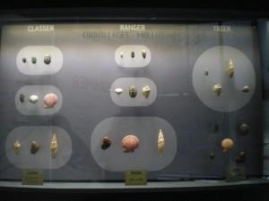 Classer, ranger, trier au Muséum de Toulouse. photo Gérard Régimbeau